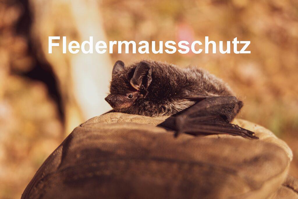 Fledermausschutz_angeschrieben