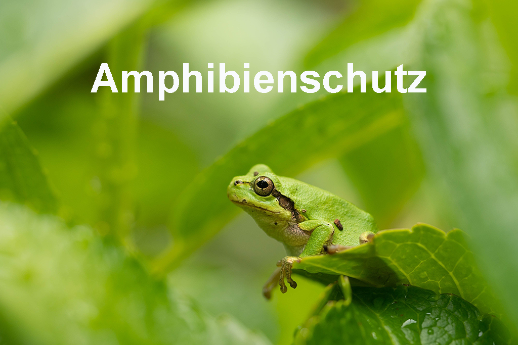 Amphibienschutz_02